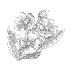 Sweet Southern Magnolias