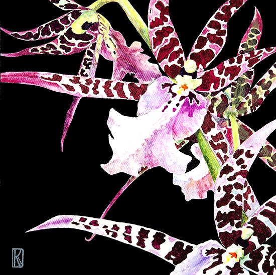 art prints - Orchid 2 Spotted Miltassia by Karen Dyson