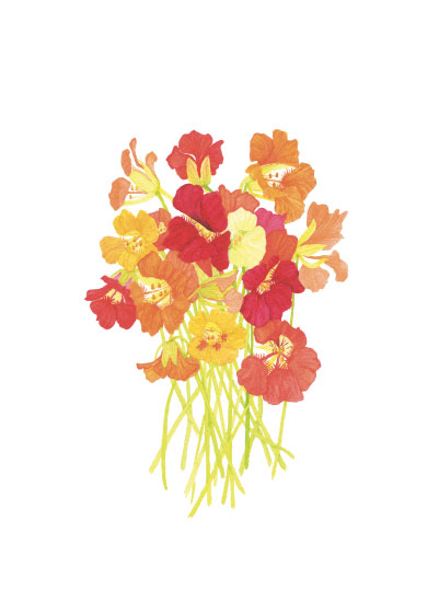 art prints - Nasturtium Bunch by Anne Butera