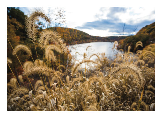 art prints - Golden Rods by Lindsey Thompson