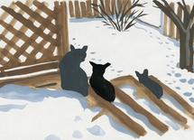 Deep snow, short cats by Molly Mabel and Mitz