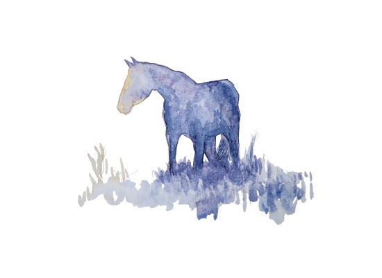 art prints - Wild Horse by Larkspur and Laurel