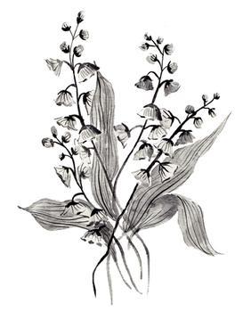 Greyscale Botanicals