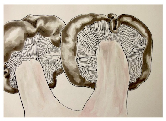 art prints - Blewit pair by Alaine Ball