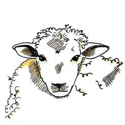 gentle sheep