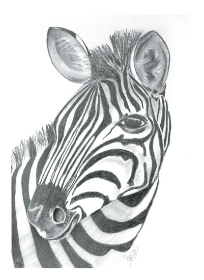 art prints - Glancing Zebra by ArtbyPunam