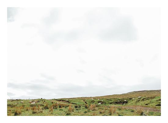 art prints - Grazing Sheep by Emily Krisky