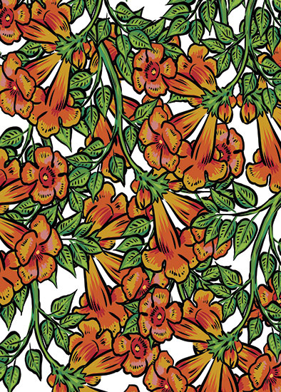 art prints - Trumpet Vine by Rachel Kennison