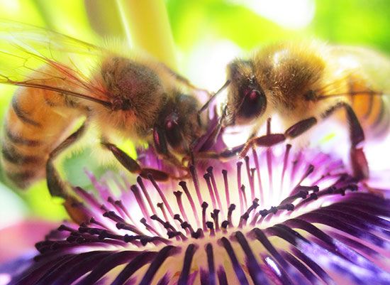 art prints - Bright Bees by Rachel Kennison