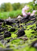 Tiny Mushroom by Rachel Kennison