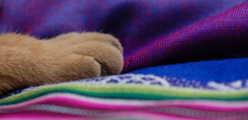 art prints - kitty by Marie Matheson