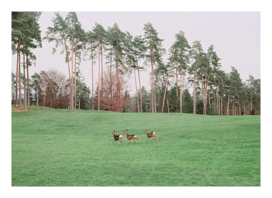 art prints - Oh, deer! by Nadinda