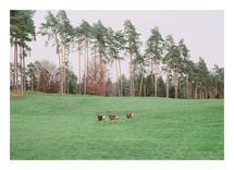 Oh, deer! by Nadinda