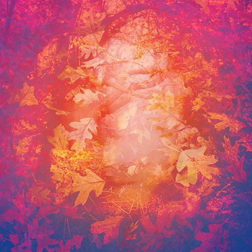 art prints - dreaming half asleep by Diane Amil