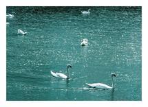 Swan lake by Nadinda