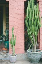 potted cacti by Kelly Christine