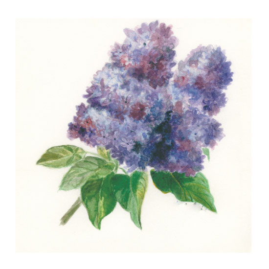 art prints - Paper Lilac by Julie and Sara