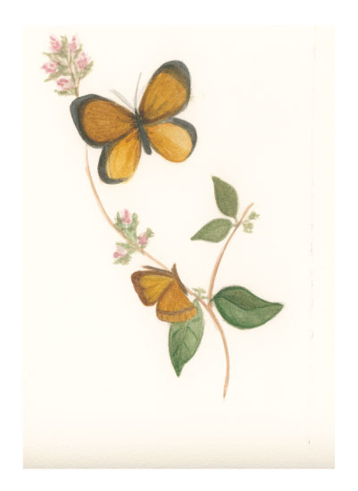 art prints - Butterfly's Soiree by Julie and Sara