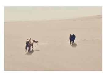Dogs in the Sandbox