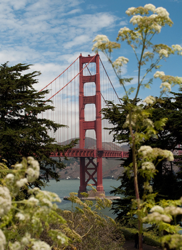 art prints - Golden Gate Flower by Kayla Sanner
