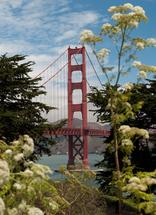 Golden Gate Flower by Kayla Sanner