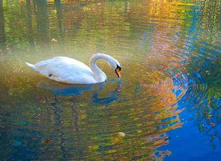 art prints - Colorful Swan Lake by Kayla Sanner