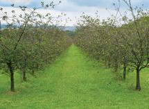 shiloh orchard by pepperdog