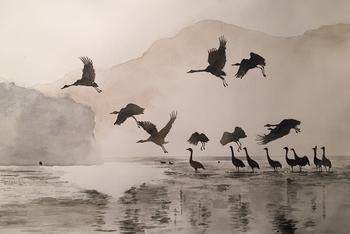 Cranes on a lake
