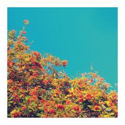 Teal Sky & Orange Flowers