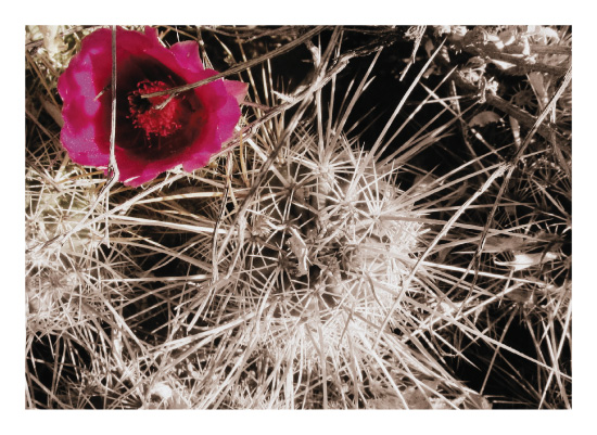 art prints - It Blooms in Tough Places by AmmandaCo