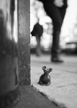 Little Bystander