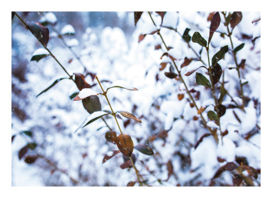 art prints - Cold Winter Day by Lindsey Thompson