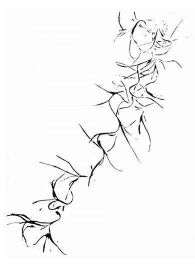art prints - Tillandsia 1 by Karen Dyson