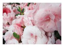 Painted Pink Floral by Lakeside Handmade
