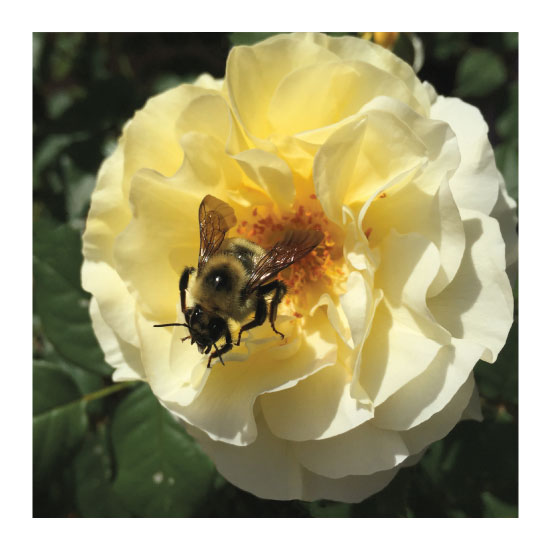 art prints - Bees and Roses by Lakeside Handmade