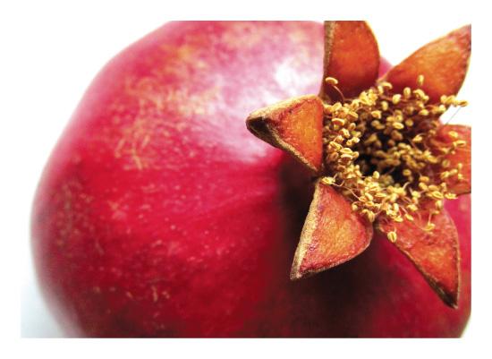 art prints - Pomegranate Beauty No.1 by AmmandaCo