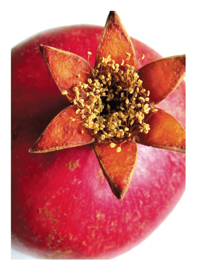 art prints - Pomegranate Beauty No.2 by AmmandaCo
