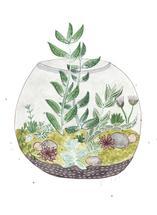 Terrarium Garden by Sarah Ehlinger