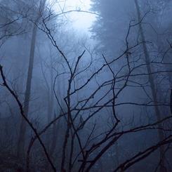 Moody blue mist