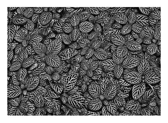 art prints - Neverending Leaves by Carrie Lee