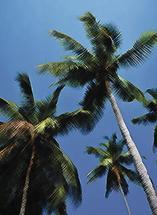 Coconut Trees by Leebert