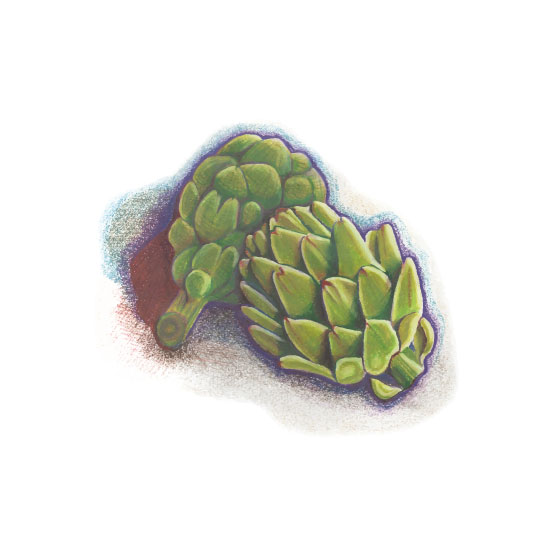 art prints - Two Artichokes by Crystal Schiller