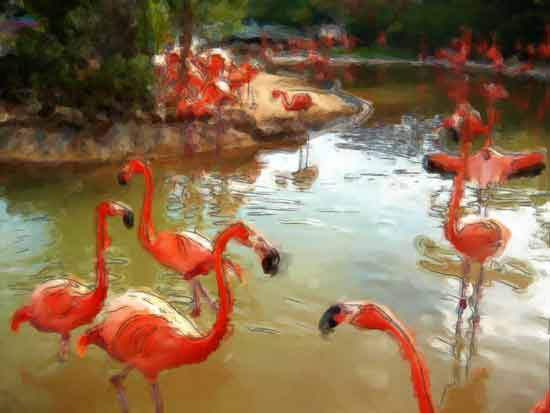 art prints - Flamingo Island by Dennis Landry