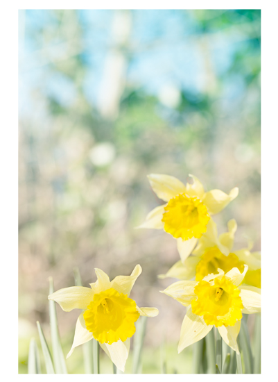 art prints - When spring arrives by Mareike von Engelbrechten