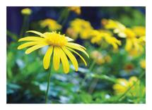 Hello yellow by Cynthia N
