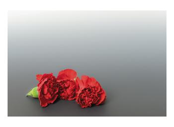 Little Carnations