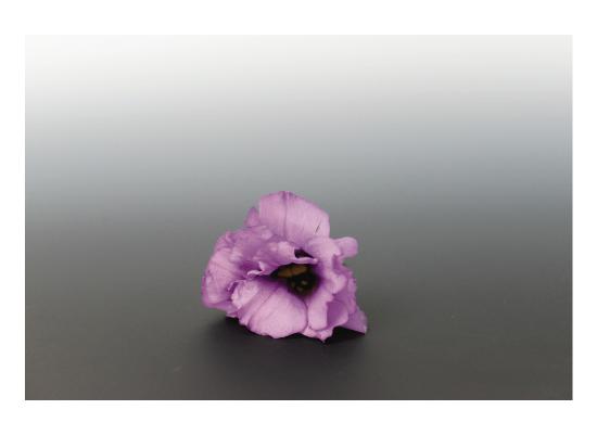 art prints - Lone Blossom by Alexandra Nazari