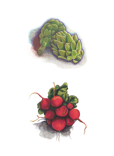 art prints - Vegetable Pencil Drawings by Crystal Schiller