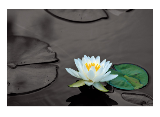 art prints - Waterlily by Victor Rafael