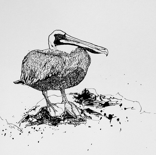art prints - Pelican on the Rocks by Rachel Knight